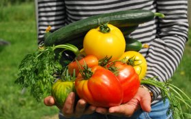 warzywa, dziecko, warzywa w diecie dziecka, dietetyk poznań